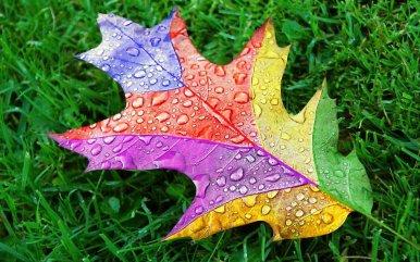 9016_A-rainbow-leaf-on-the-grass-with-rain-drops